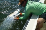Release of a tarpon caught by Debbie Miller during the 2015 Suncoast Tarpon Roundup