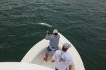 Doug F with his tarpon from the Full Moon in June during the 81st STR.