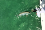 Trent Long releases a tarpon for the 81st STR May 2015