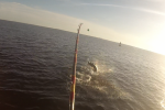 Jacob Haddad - 1st Tarpon of 2016
