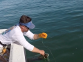 James Tarpon Release